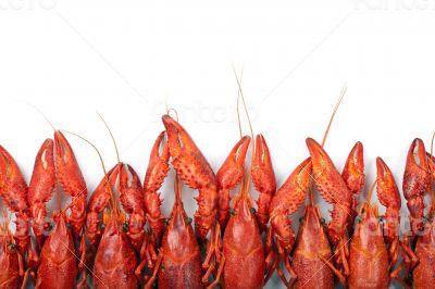Many red crayfish