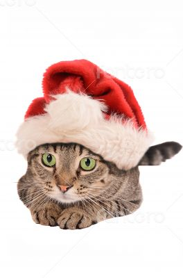 Cute Tabby Cat In a Christmas Hat - holiday theme
