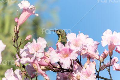 Beautiful bird in the flowers