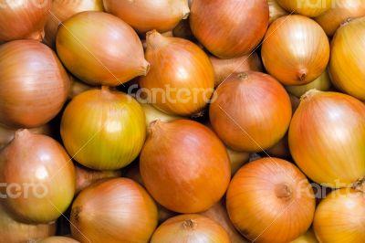 Vegetables: a large number of large ripe Luke.