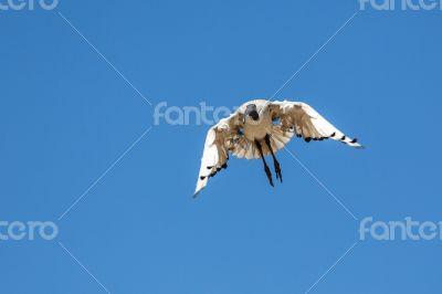 A Crane in flight
