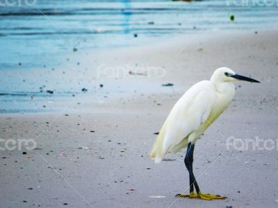 White Egret on the Shore of a Beach