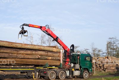 Transport of cleared trees trunks