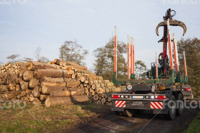 Transport of cleared trees