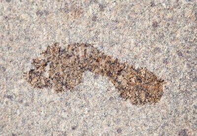 Wet footprint on granite