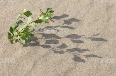 Sprout in the sand
