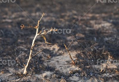 After the forest fire