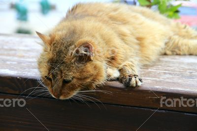 Red fluffy cat sits on the fence