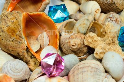 Several different shells and colorful glass pebbles