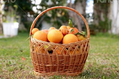 Basket full of exotic fruits