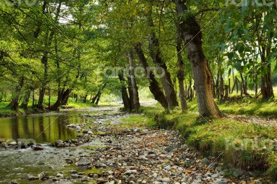 Small River in Countryside