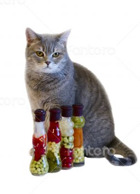 Gray cat with yellow eyes near decorative bottles with canned ve