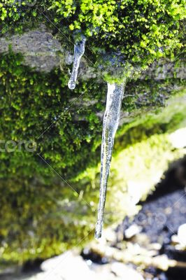 Frozen icicles hanging from the stone in the forest