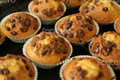 Muffins with chocolate chips on the baking tray