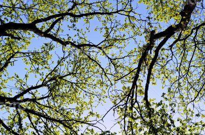 Tree foliage against blue sky