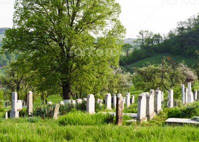 Countryside cemetery with green grass and trees