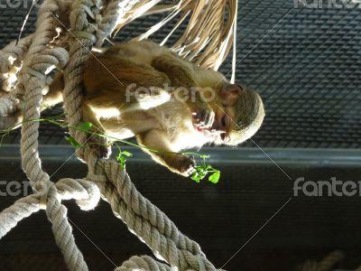 Monkey eating