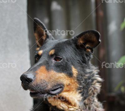Portrait of mature dog sitting on the backyard