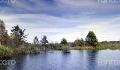lake and spring forest. Nature composition
