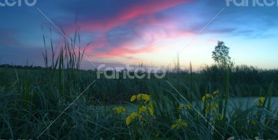Spring landscape with yellow flower on hill and majestic sunset