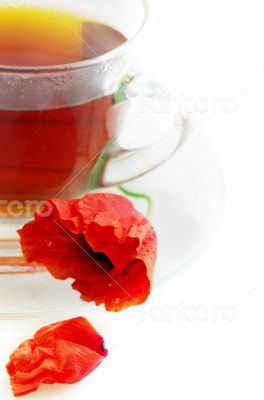 Poppy in glass cup on white table