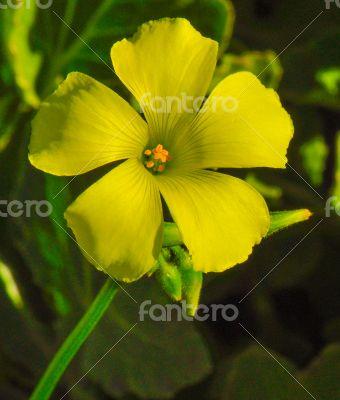 yellow-flower-stem