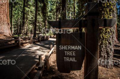 sherman tree trail inside