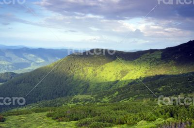Beautiful view from mountains with dwarf pine in the foreground