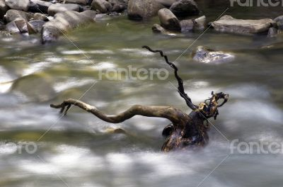 mountain river. Beauty wild nature landscape