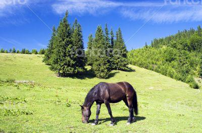 Horses in the Ukrainian Carpathians