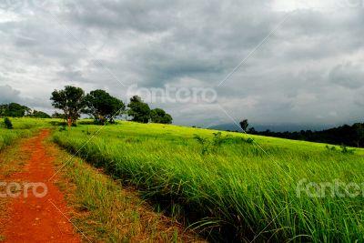 Way to Grassland in Khao Yai