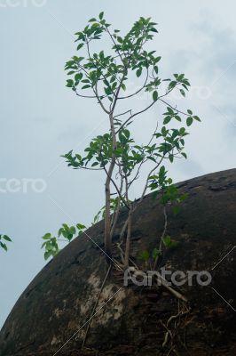 Plant on Tomb