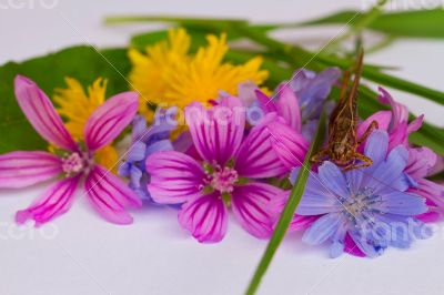 Small bunch of bright meadow flowers.