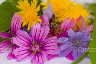Grasshopper sits on bouquet of colorful flowers