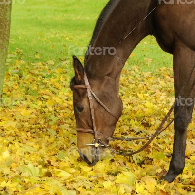 Enjoying the leaves
