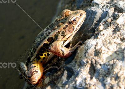Frog Climbing Wall