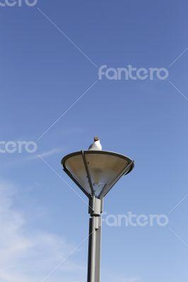 Bird on a lamp post
