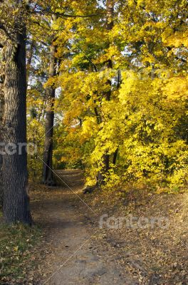 Path leading through the autumn forest on a sunny late afternoon