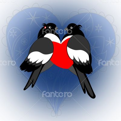 A pair of lovers bullfinches with heart