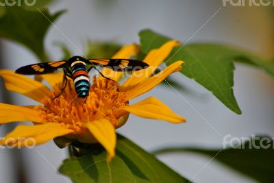 Insect on flower - so colorful
