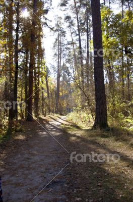 Collection of Beautiful Colorful Autumn Leaves / green, yellow,