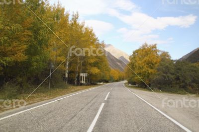 Empty asphalt road, trees with yellowed leaves