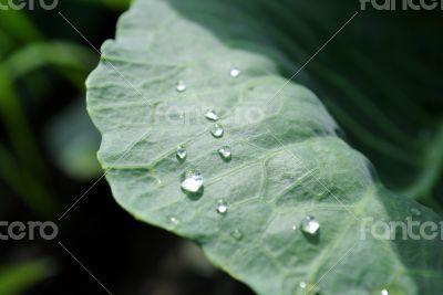 dew on sheet