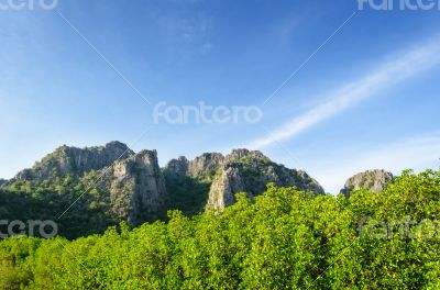 Mountain and mangrove forest