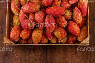 Many cactus pear or nopal