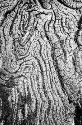Texture of old wood black and white