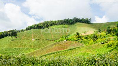 Farmland on the hill
