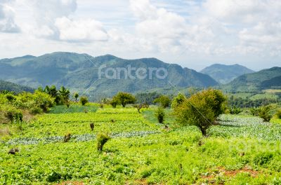 Agriculture on the plateau
