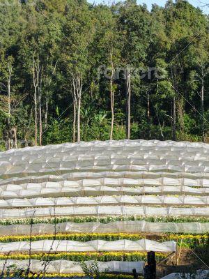 Flower farm on mountain