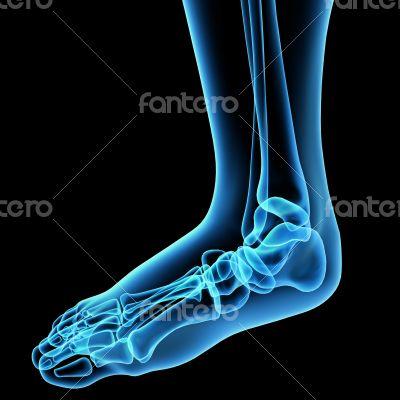 3d render illustration of the  foot